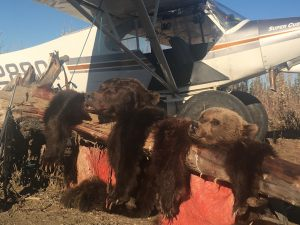 2018 Grizzly Bear Hunts - BB4