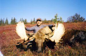 moose_4