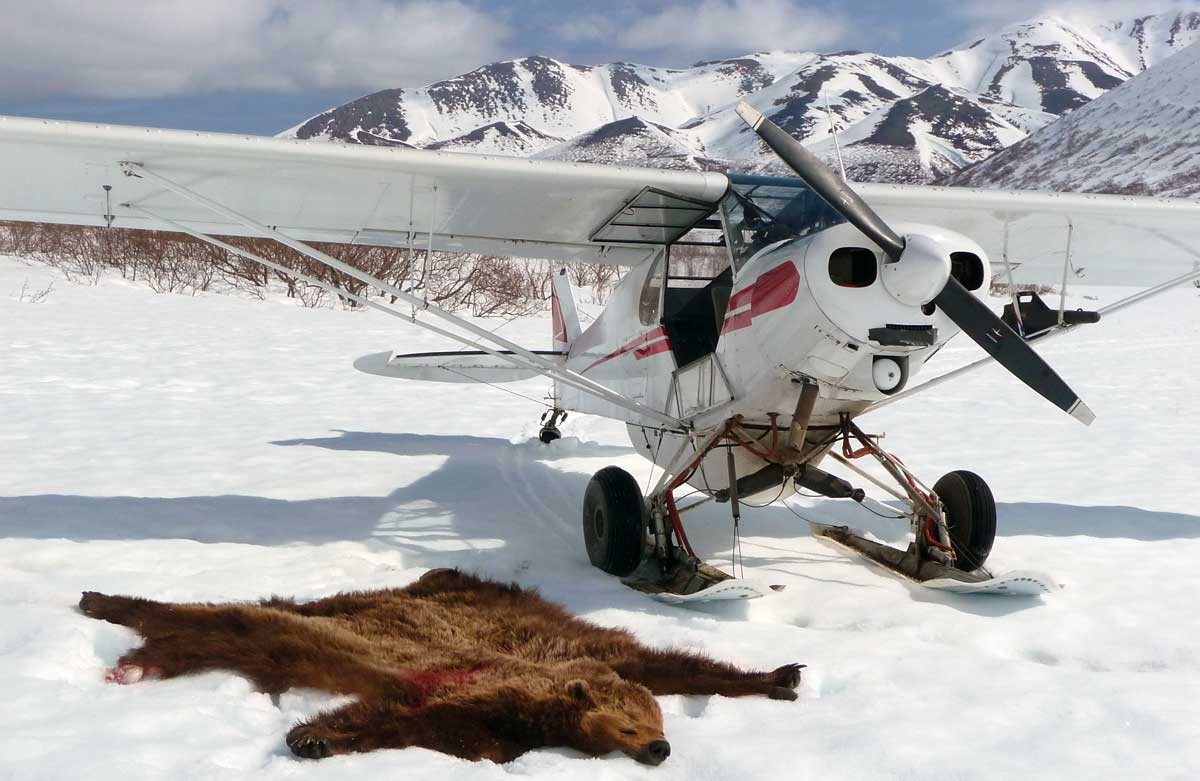 alaska wilderness guiding and charters
